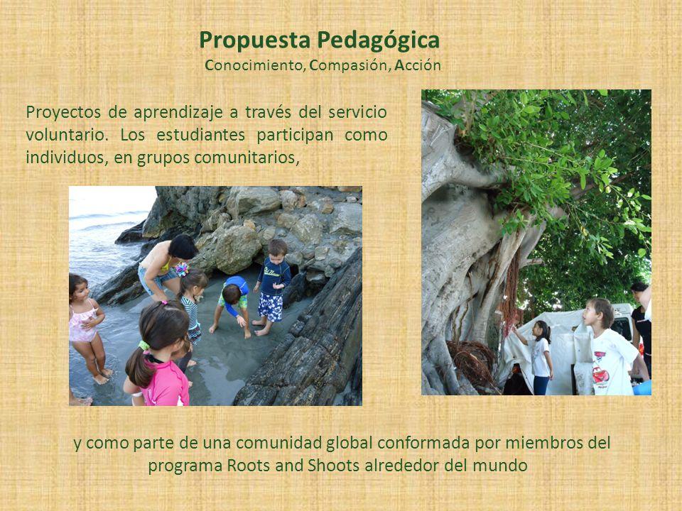 y como parte de una comunidad global conformada por miembros del programa Roots and Shoots alrededor del mundo Propuesta Pedagógica Conocimiento, Comp