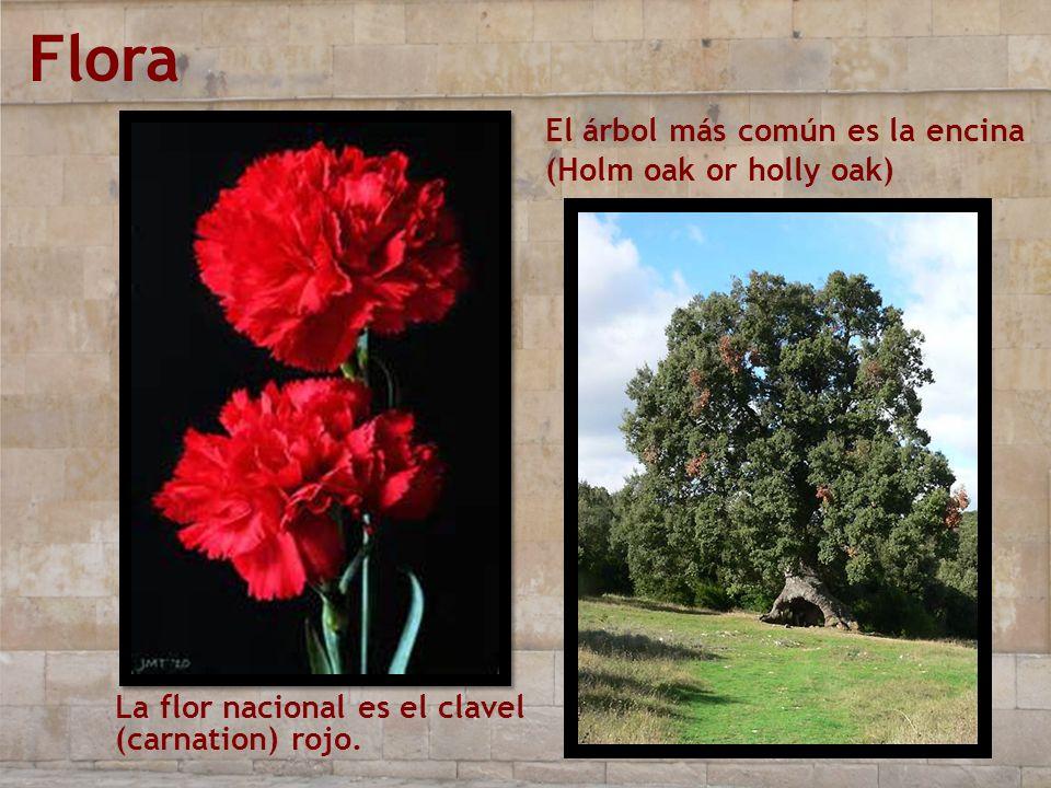 Flora La flor nacional es el clavel (carnation) rojo. El árbol más común es la encina (Holm oak or holly oak)