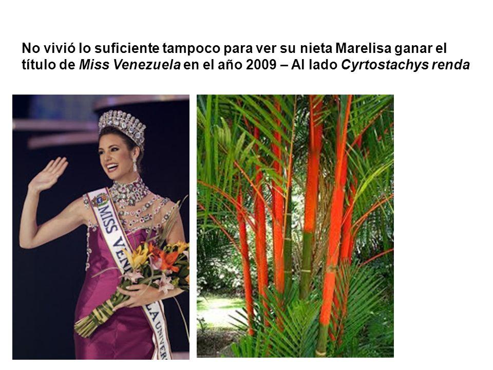 No vivió lo suficiente tampoco para ver su nieta Marelisa ganar el título de Miss Venezuela en el año 2009 – Al lado Cyrtostachys renda