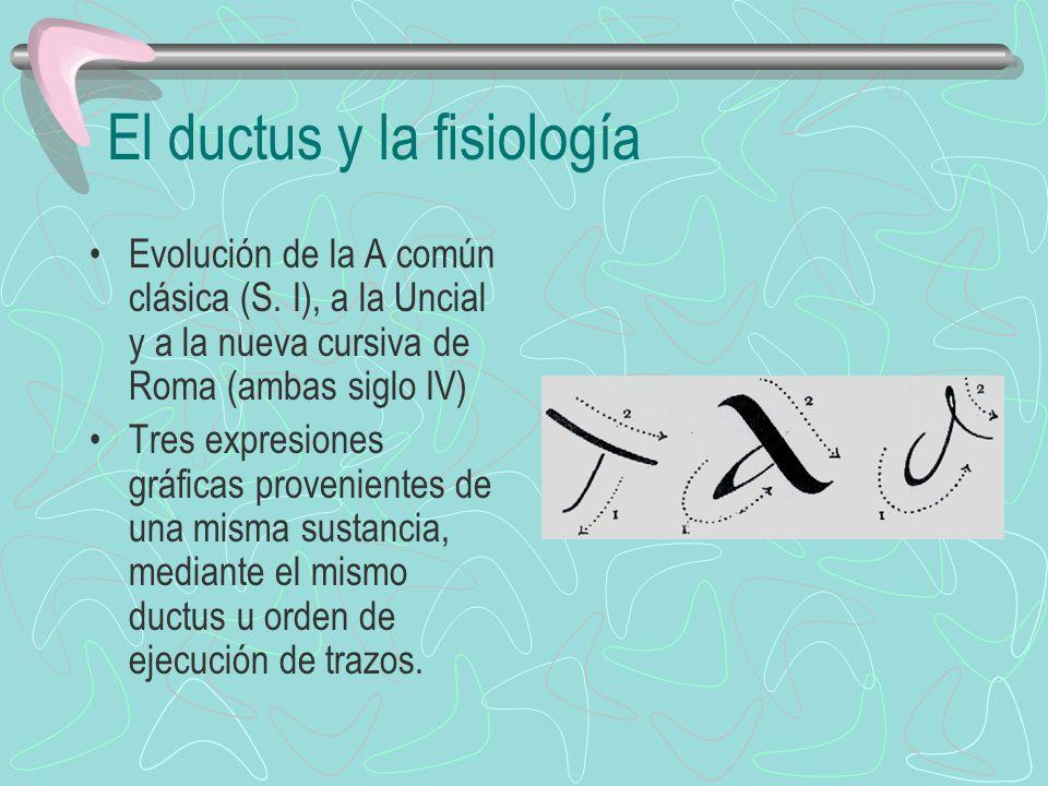 El ductus y la fisiología Evolución de la A común clásica (S. I), a la Uncial y a la nueva cursiva de Roma (ambas siglo IV) Tres expresiones gráficas