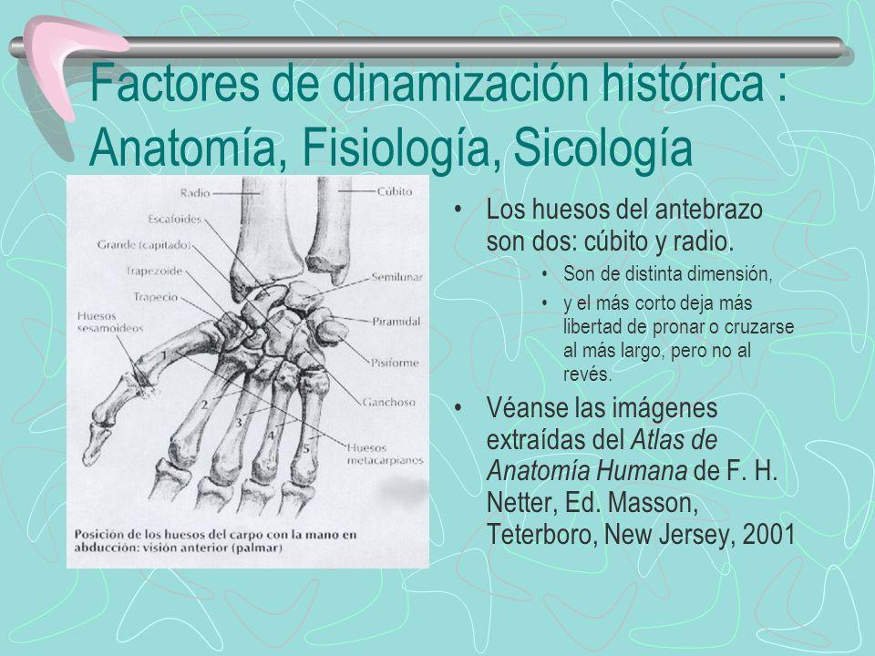 Factores de dinamización histórica : Anatomía, Fisiología, Sicología Los huesos del antebrazo son dos: cúbito y radio. Son de distinta dimensión, y el