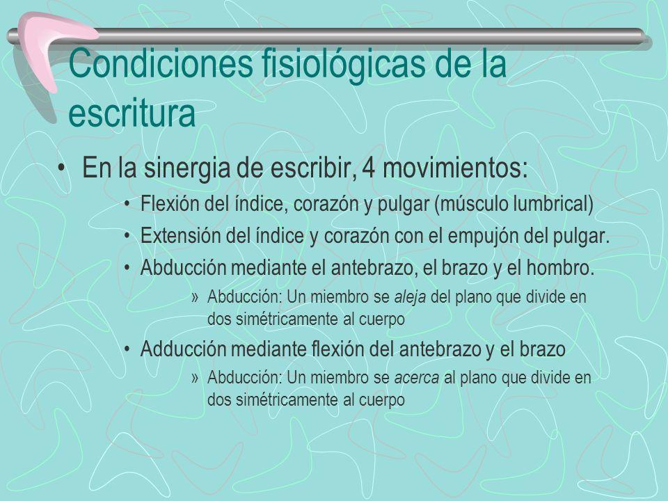 Condiciones fisiológicas de la escritura En la sinergia de escribir, 4 movimientos: Flexión del índice, corazón y pulgar (músculo lumbrical) Extensión