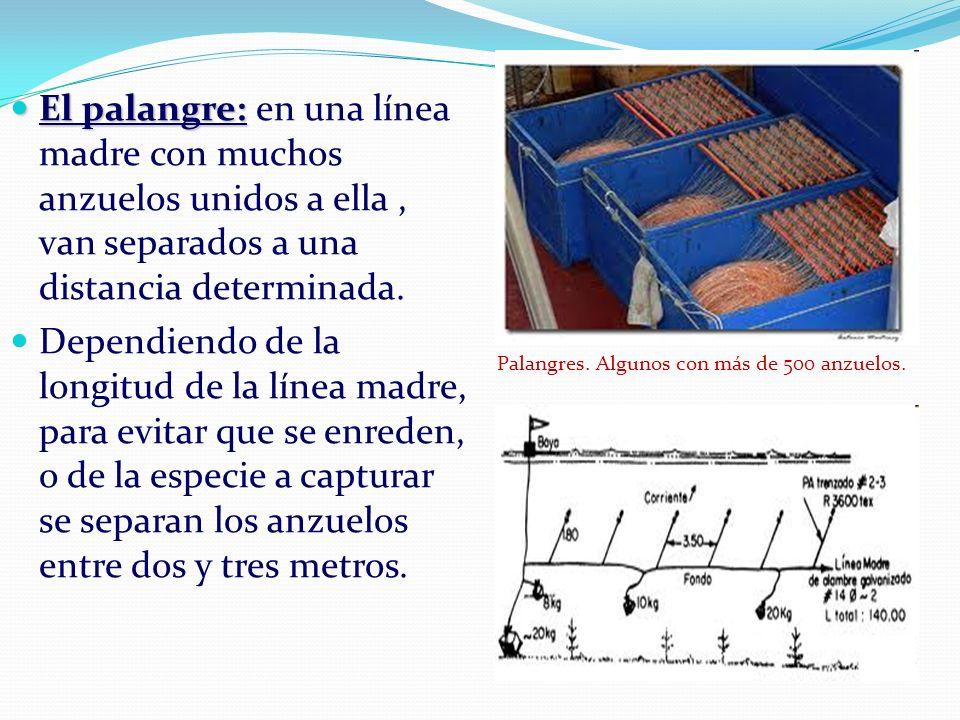 El palangre: El palangre: en una línea madre con muchos anzuelos unidos a ella, van separados a una distancia determinada. Dependiendo de la longitud