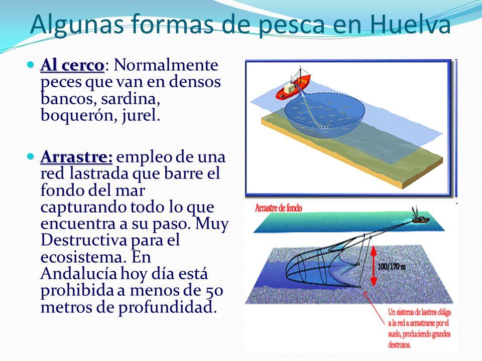 Algunas formas de pesca en Huelva Al cerco Al cerco: Normalmente peces que van en densos bancos, sardina, boquerón, jurel. Arrastre: Arrastre: empleo
