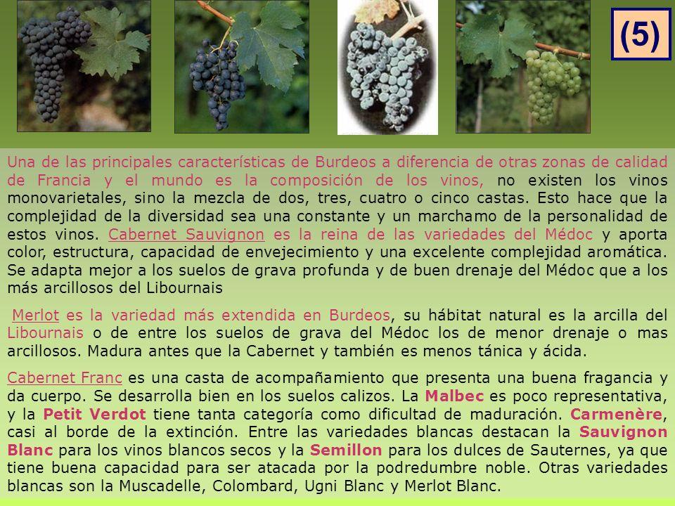 Una de las principales características de Burdeos a diferencia de otras zonas de calidad de Francia y el mundo es la composición de los vinos, no existen los vinos monovarietales, sino la mezcla de dos, tres, cuatro o cinco castas.