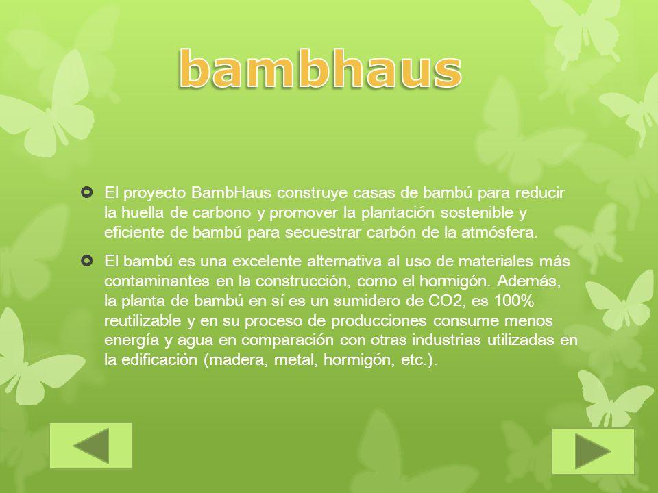 El proyecto BambHaus construye casas de bambú para reducir la huella de carbono y promover la plantación sostenible y eficiente de bambú para secuestr