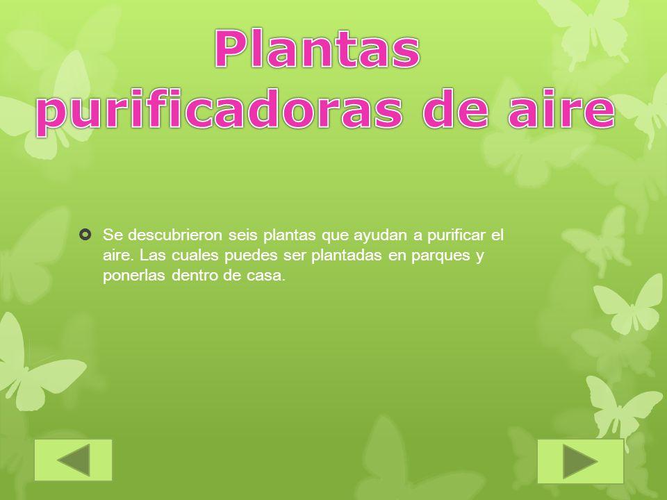Se descubrieron seis plantas que ayudan a purificar el aire. Las cuales puedes ser plantadas en parques y ponerlas dentro de casa.