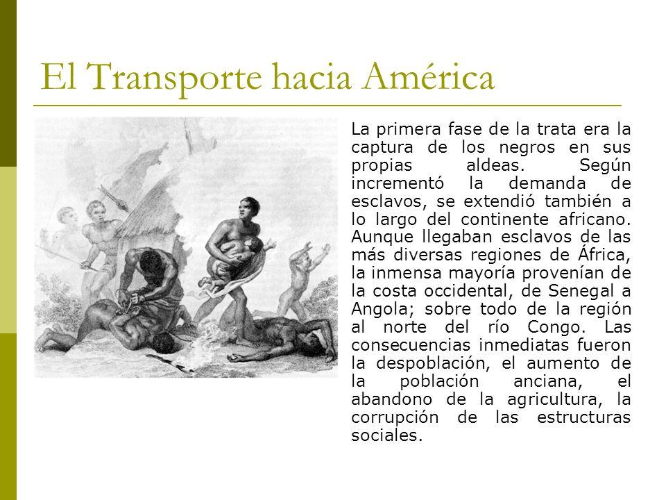 El Transporte hacia América La primera fase de la trata era la captura de los negros en sus propias aldeas. Según incrementó la demanda de esclavos, s
