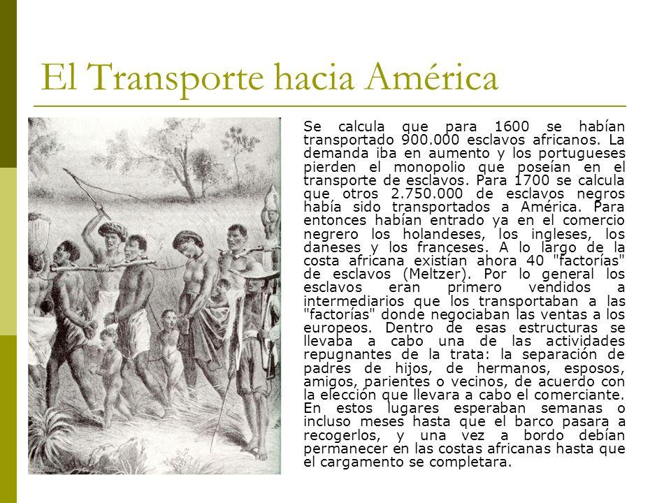 El Transporte hacia América Se calcula que para 1600 se habían transportado 900.000 esclavos africanos. La demanda iba en aumento y los portugueses pi