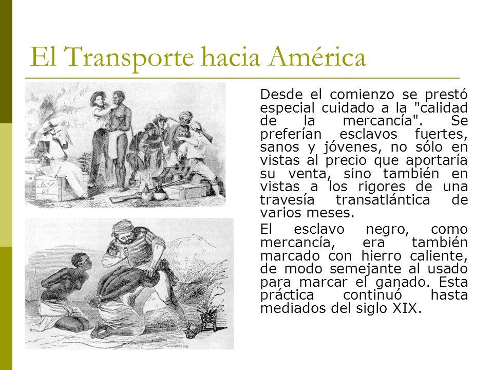 El Transporte hacia América Desde el comienzo se prestó especial cuidado a la