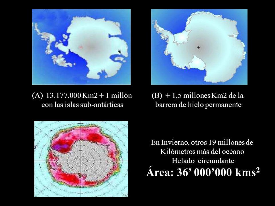 (A)13.177.000 Km2 + 1 millón con las islas sub-antárticas (B)+ 1,5 millones Km2 de la barrera de hielo permanente En Invierno, otros 19 millones de Ki