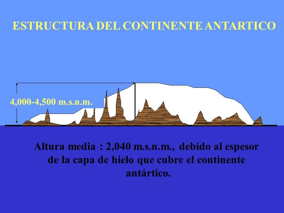 4,000-4,500 m.s.n.m. ESTRUCTURA DEL CONTINENTE ANTARTICO Altura media : 2,040 m.s.n.m., debido al espesor de la capa de hielo que cubre el continente