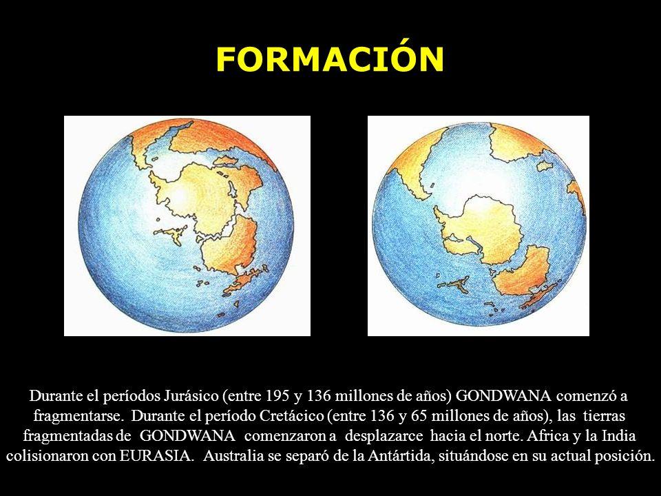 FORMACIÓN Durante el períodos Jurásico (entre 195 y 136 millones de años) GONDWANA comenzó a fragmentarse. Durante el período Cretácico (entre 136 y 6