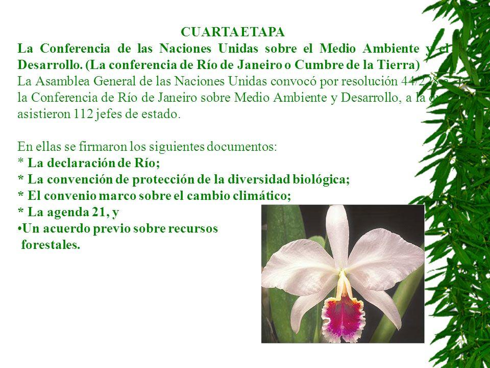 CUARTA ETAPA La Conferencia de las Naciones Unidas sobre el Medio Ambiente y el Desarrollo. (La conferencia de Río de Janeiro o Cumbre de la Tierra) L