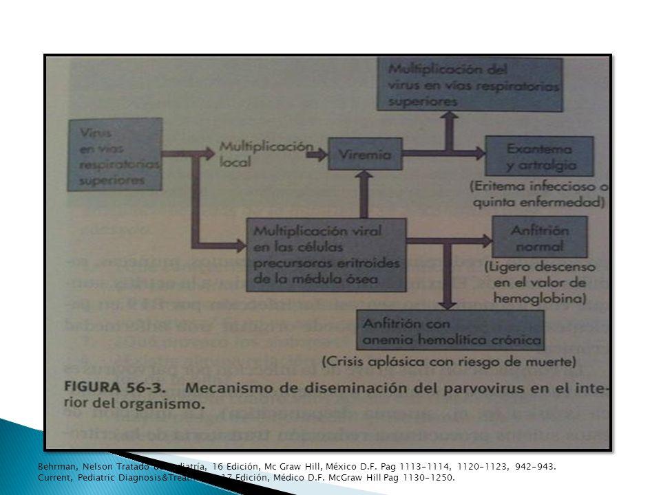 Behrman, Nelson Tratado de Pediatría, 16 Edición, Mc Graw Hill, México D.F. Pag 1113-1114, 1120-1123, 942-943. Current, Pediatric Diagnosis&Treatment.