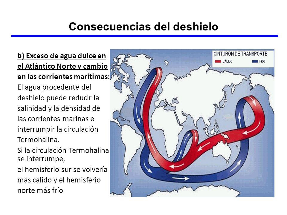 b) Exceso de agua dulce en el Atlántico Norte y cambio en las corrientes marítimas: El agua procedente del deshielo puede reducir la salinidad y la de