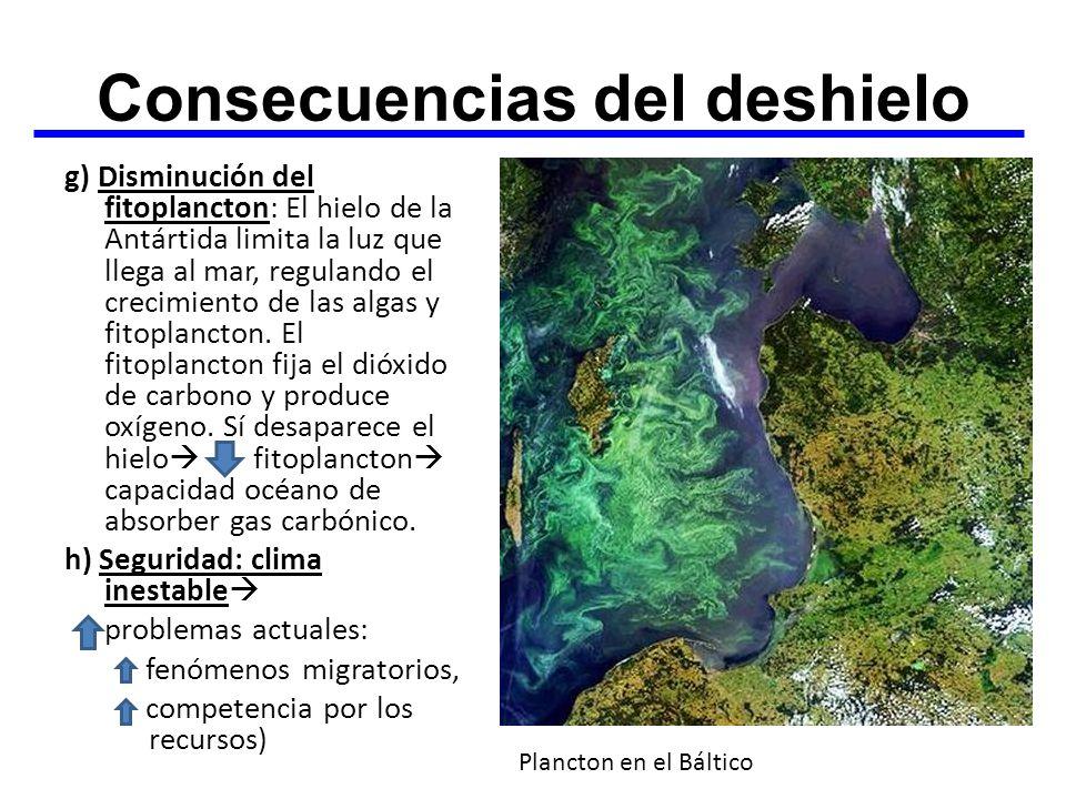 Consecuencias del deshielo g) Disminución del fitoplancton: El hielo de la Antártida limita la luz que llega al mar, regulando el crecimiento de las a