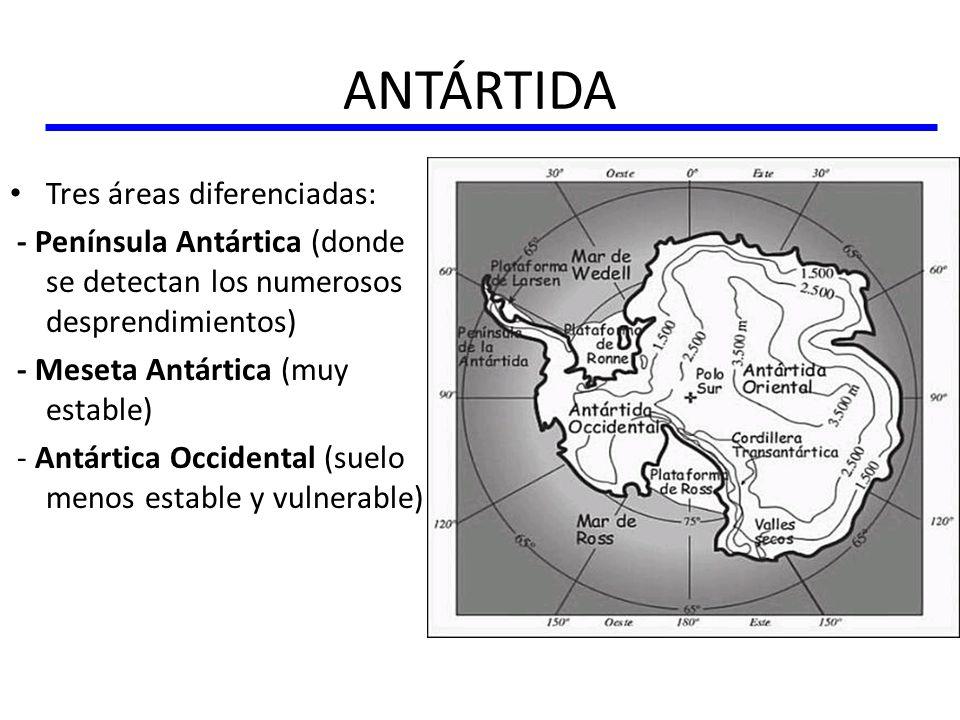 ANTÁRTIDA Tres áreas diferenciadas: - Península Antártica (donde se detectan los numerosos desprendimientos) - Meseta Antártica (muy estable) - Antárt