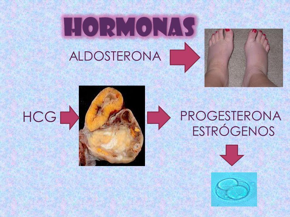 ALDOSTERONA HCG PROGESTERONA ESTRÓGENOS