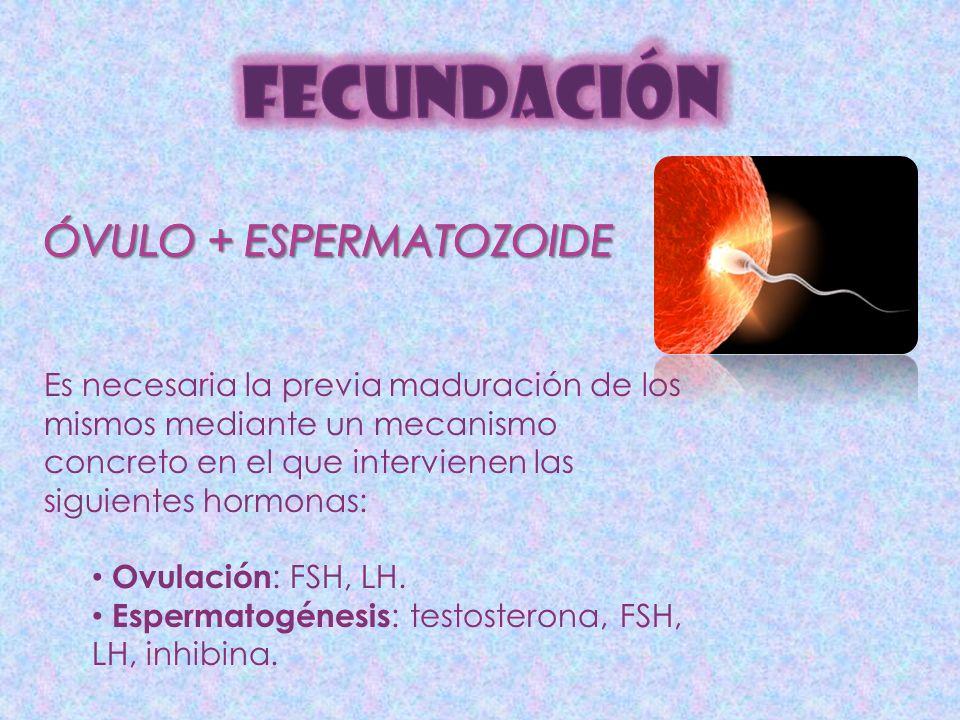Es necesaria la previa maduración de los mismos mediante un mecanismo concreto en el que intervienen las siguientes hormonas: Ovulación : FSH, LH. Esp