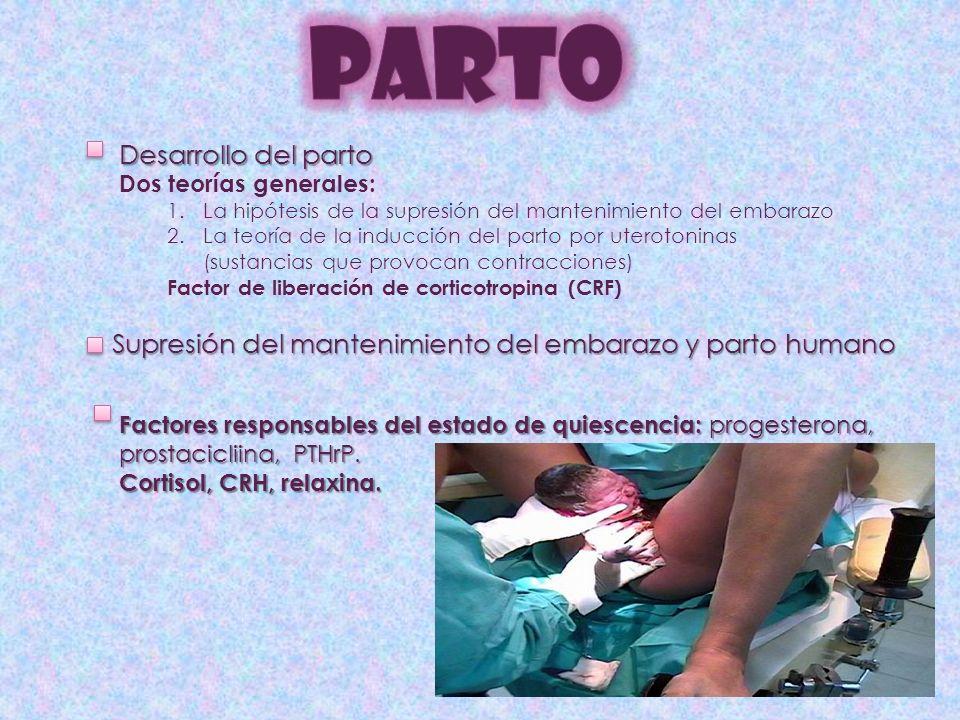 Desarrollo del parto Dos teorías generales: 1.La hipótesis de la supresión del mantenimiento del embarazo 2.La teoría de la inducción del parto por uterotoninas (sustancias que provocan contracciones) Factor de liberación de corticotropina (CRF) Supresión del mantenimiento del embarazo y parto humano Factores responsables del estado de quiescencia: progesterona, prostacicliina, PTHrP.
