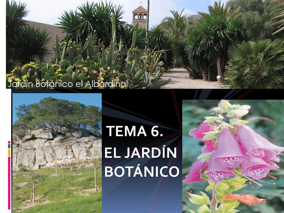JARDINES BOTÁNICOS TEMA 6. EL JARDÍN BOTÁNICO