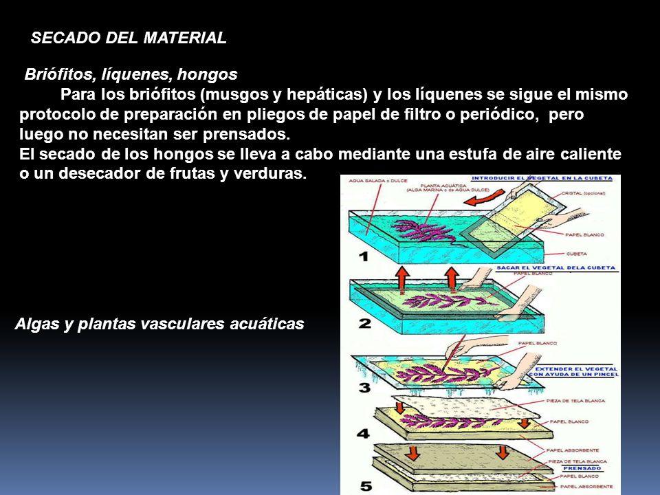 Briófitos, líquenes, hongos Para los briófitos (musgos y hepáticas) y los líquenes se sigue el mismo protocolo de preparación en pliegos de papel de f