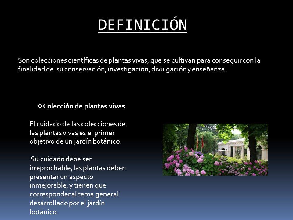 DEFINICIÓN Son colecciones científicas de plantas vivas, que se cultivan para conseguir con la finalidad de su conservación, investigación, divulgació