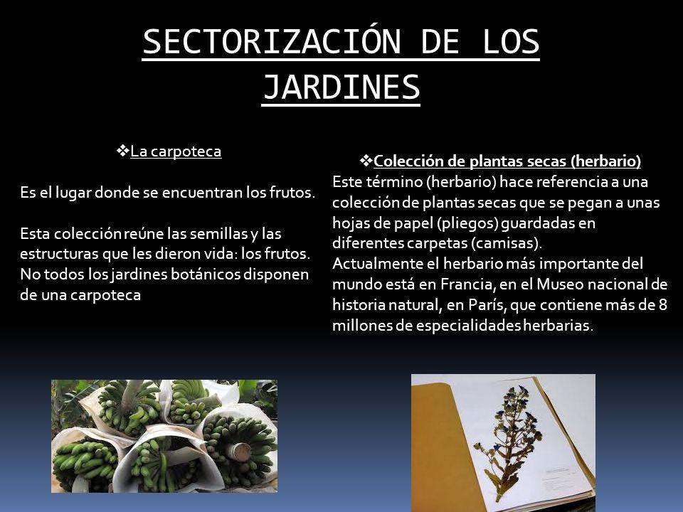 SECTORIZACIÓN DE LOS JARDINES La carpoteca Es el lugar donde se encuentran los frutos. Esta colección reúne las semillas y las estructuras que les die