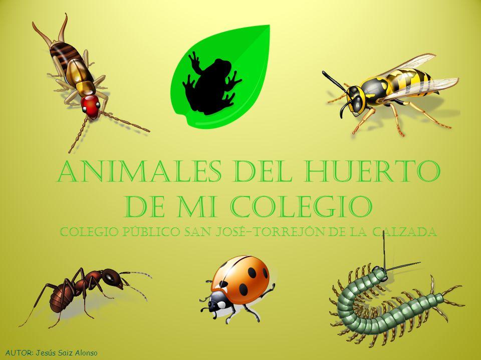 ANIMALES DEL HUERTO DE MI COLEGIO Colegio público San José-Torrejón de la Calzada AUTOR: Jesús Saiz Alonso