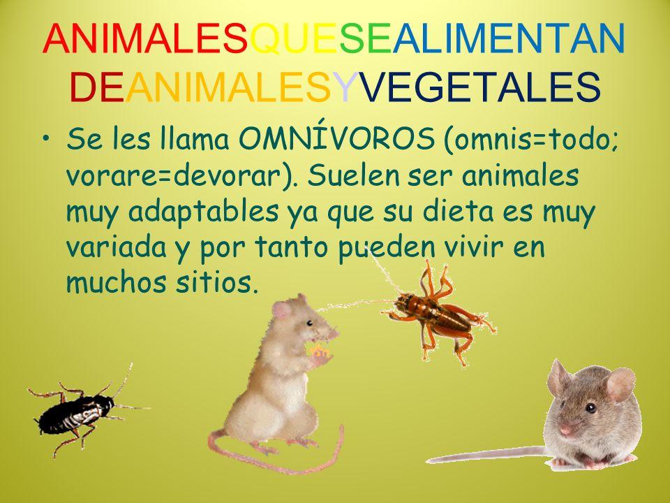 ANIMALESQUESEALIMENTAN DEANIMALESYVEGETALES Se les llama OMNÍVOROS (omnis=todo; vorare=devorar). Suelen ser animales muy adaptables ya que su dieta es