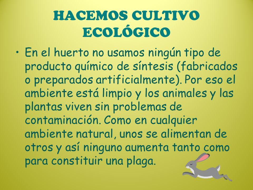 HACEMOS CULTIVO ECOLÓGICO En el huerto no usamos ningún tipo de producto químico de síntesis (fabricados o preparados artificialmente). Por eso el amb