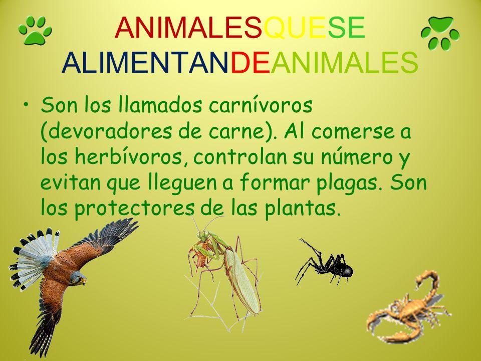 ANIMALESQUESE ALIMENTANDEANIMALES Son los llamados carnívoros (devoradores de carne). Al comerse a los herbívoros, controlan su número y evitan que ll