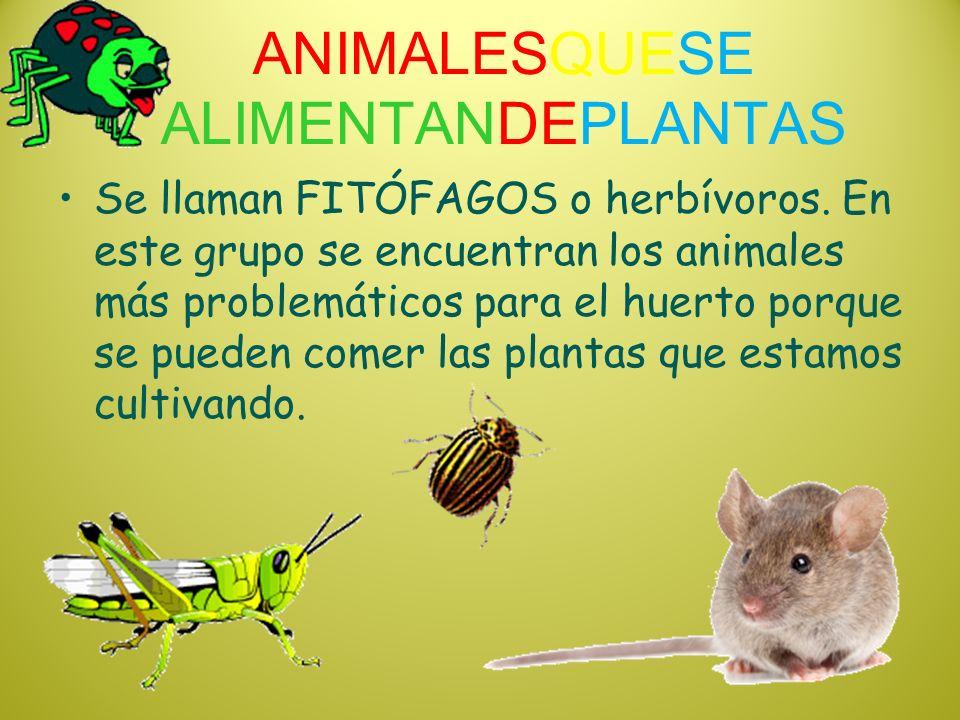ANIMALESQUESE ALIMENTANDEPLANTAS Se llaman FITÓFAGOS o herbívoros. En este grupo se encuentran los animales más problemáticos para el huerto porque se