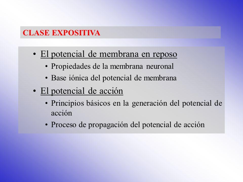 Tema 7.El potencial de membrana en reposo y el potencial de acción.