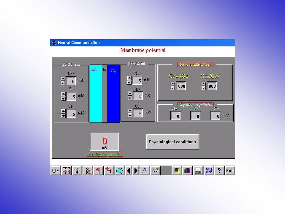 potencial de membrana Introdúzcase en el módulo del potencial de membrana.