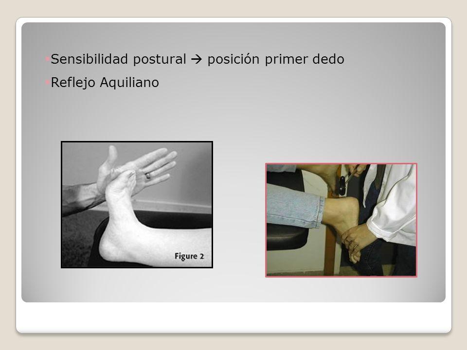 Sensibilidad postural posición primer dedo Reflejo Aquiliano