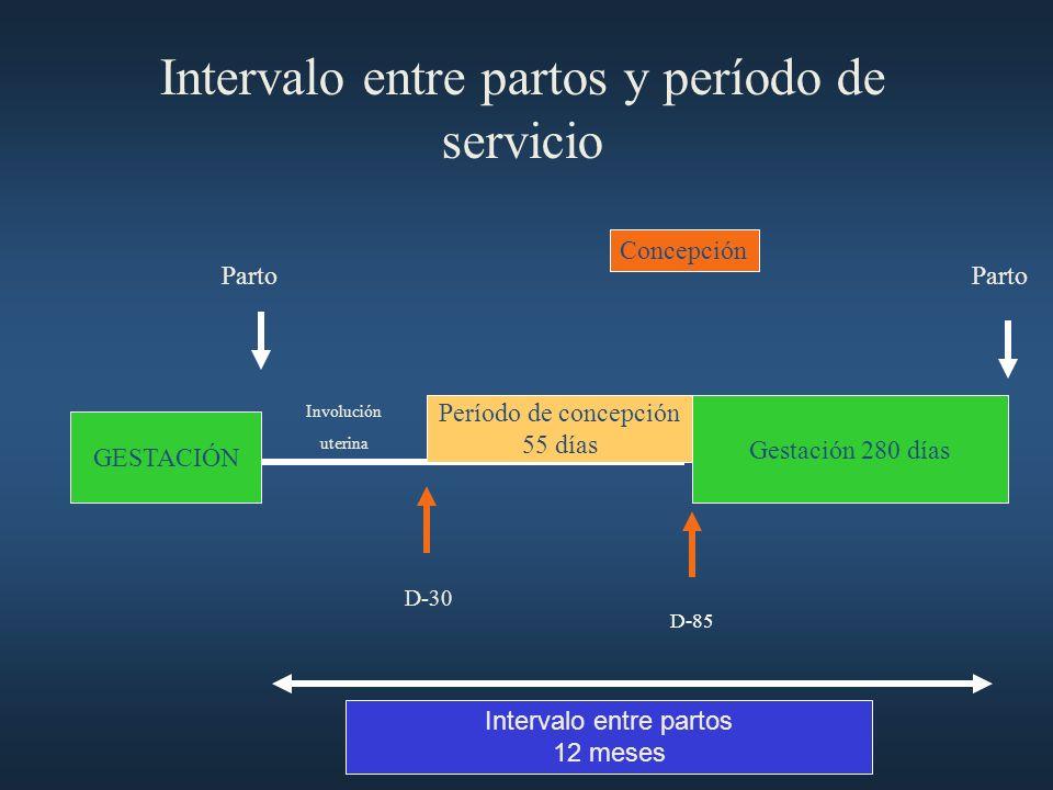 IMPACTO DEL USO DE UN TORO SUBFERTIL VALOR REPRODUCTIVO ESTIMADO : +40 (PESO A 400 d) 50 VACAS A B FERTIL SUBFERTIL 90 d x 4 años = 85 % 30% 170 60