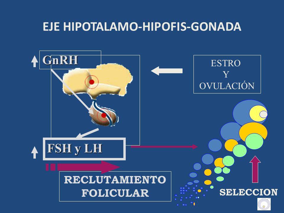 MECANISMO ENDOCRINO DEL CICLO ESTRAL BOVINO – DIESTRO O FASE LUTEICA 3) CUERPO LÚTEO ACTIVO = P 4 GnRH PROGESTERONA del CL inhibe la liberación de GnRH Disminuye liberación de FSH y LH para continuar el Des.