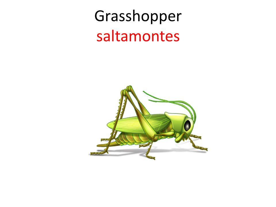 ¿Qué cuadro demuestra un insecto que salta?