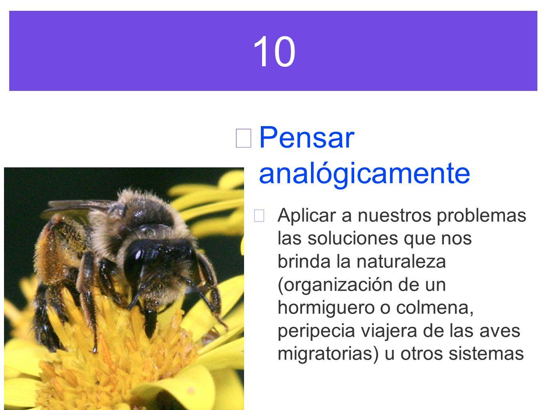 10 Pensar analógicamente Aplicar a nuestros problemas las soluciones que nos brinda la naturaleza (organización de un hormiguero o colmena, peripecia