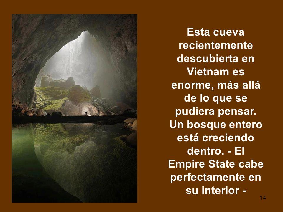 14 Esta cueva recientemente descubierta en Vietnam es enorme, más allá de lo que se pudiera pensar. Un bosque entero está creciendo dentro. - El Empir
