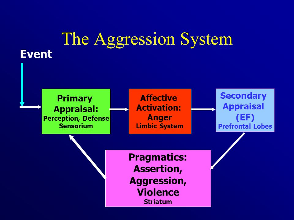 The Aggression System Pragmatics: Assertion, Aggression, Violence Striatum Event Primary Appraisal: Perception, Defense Sensorium Secondary Appraisal (EF) Prefrontal Lobes Affective Activation: Anger Limbic System
