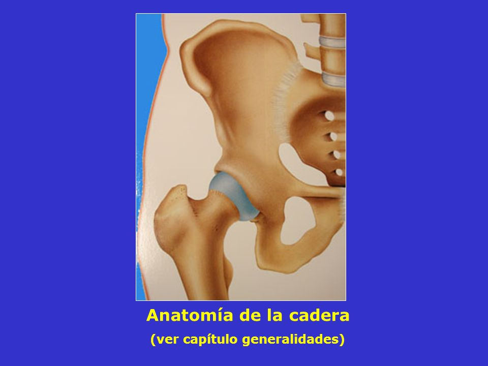Anatomía de la cadera (ver capítulo generalidades)