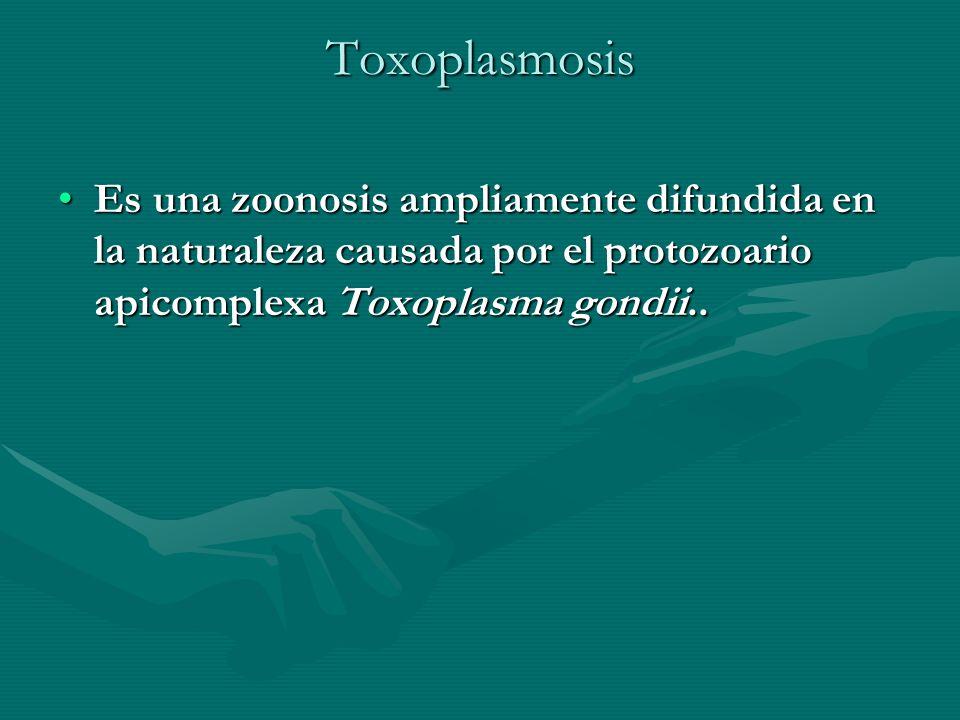 Toxoplasmosis Es una zoonosis ampliamente difundida en la naturaleza causada por el protozoario apicomplexa Toxoplasma gondii..Es una zoonosis ampliam