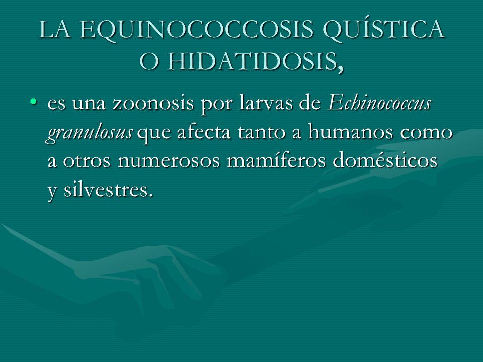 LA EQUINOCOCCOSIS QUÍSTICA O HIDATIDOSIS, es una zoonosis por larvas de Echinococcus granulosus que afecta tanto a humanos como a otros numerosos mamí