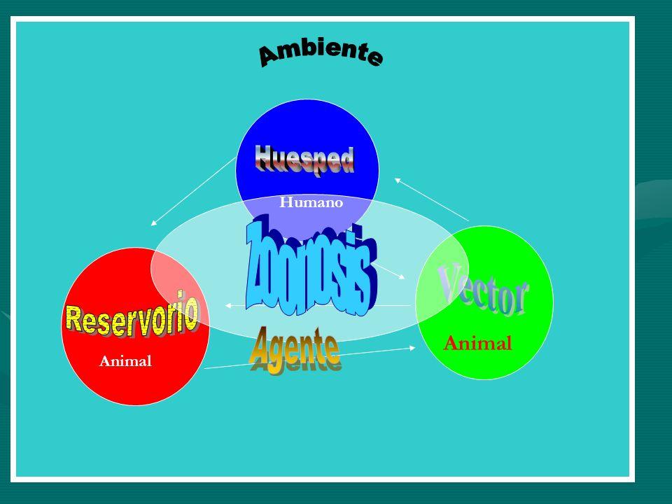 ZOONOSIS CHAGASCHAGAS TOXOPLASMOSISTOXOPLASMOSIS EQUINOCOCOSIS QUISTICAEQUINOCOCOSIS QUISTICA SALMONELOSISSALMONELOSIS RABIARABIA LEPTOSPIROSISLEPTOSPIROSIS HANTA VIRUSHANTA VIRUS