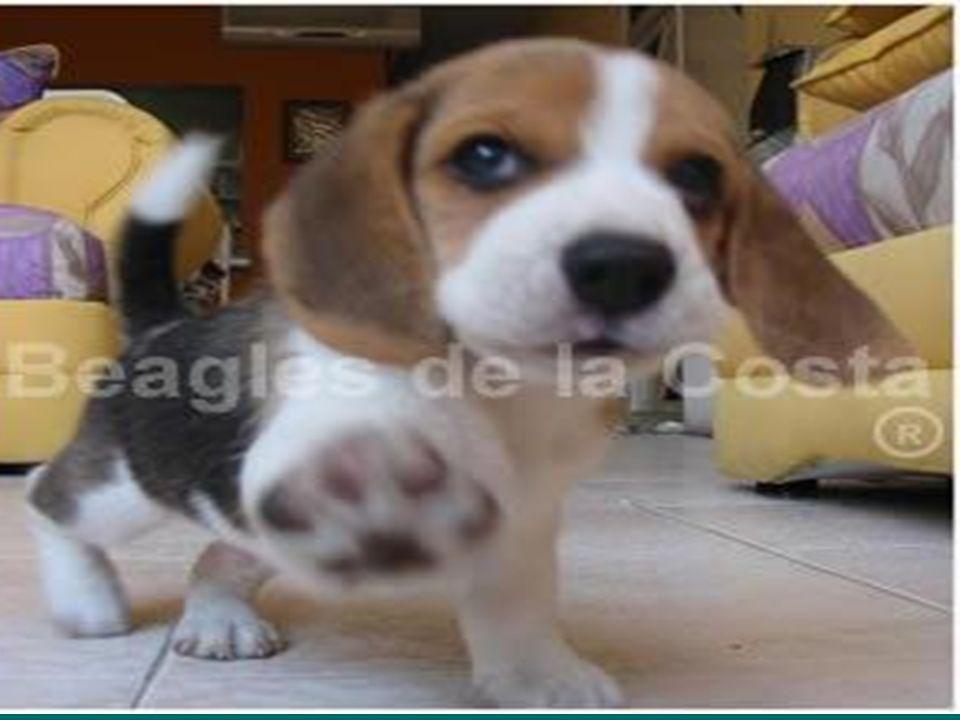 HIDATIDOSIS EVITAR QUE LAS PERSONAS SE ENFERMEN:. Tener a los perros en forma responsable. Reducir el número de perros (castración). Lavarse las manos