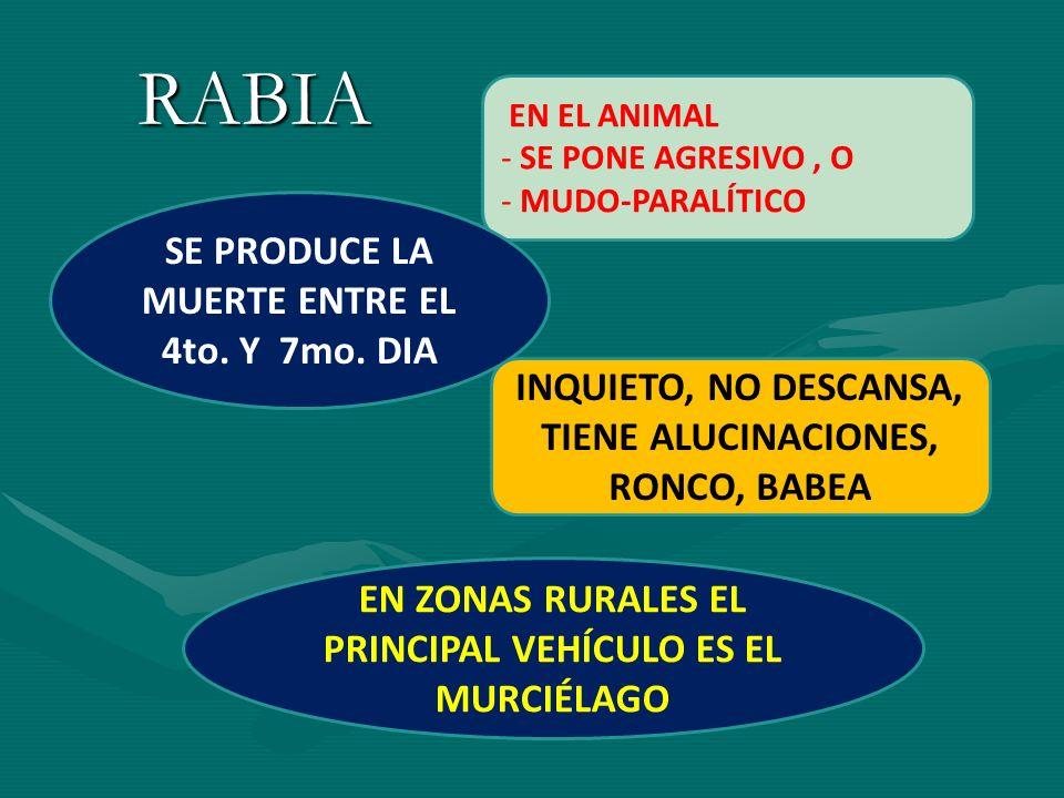 RABIA EN EL ANIMAL - SE PONE AGRESIVO, O - MUDO-PARALÍTICO INQUIETO, NO DESCANSA, TIENE ALUCINACIONES, RONCO, BABEA SE PRODUCE LA MUERTE ENTRE EL 4to.