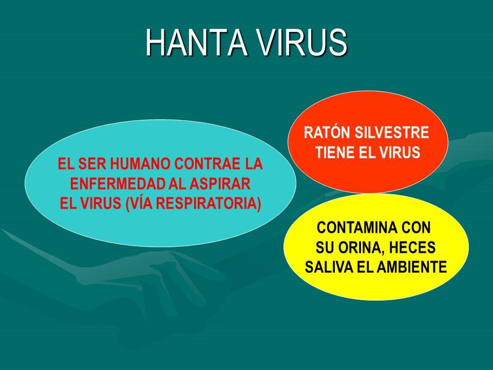 HANTA VIRUS RATÓN SILVESTRE TIENE EL VIRUS CONTAMINA CON SU ORINA, HECES SALIVA EL AMBIENTE EL SER HUMANO CONTRAE LA ENFERMEDAD AL ASPIRAR EL VIRUS (V